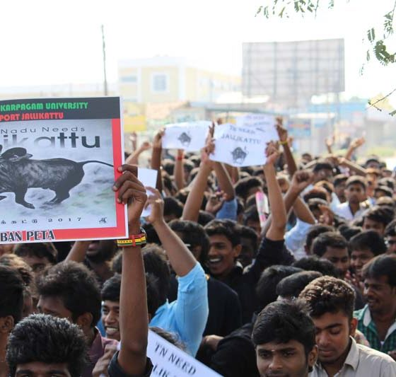 Karpagam Architecture - Student Jallikattu Protest